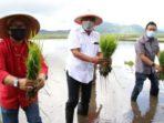 Gubernur Sulawesi Utara Olly Dondokambey melakukan penanaman padi